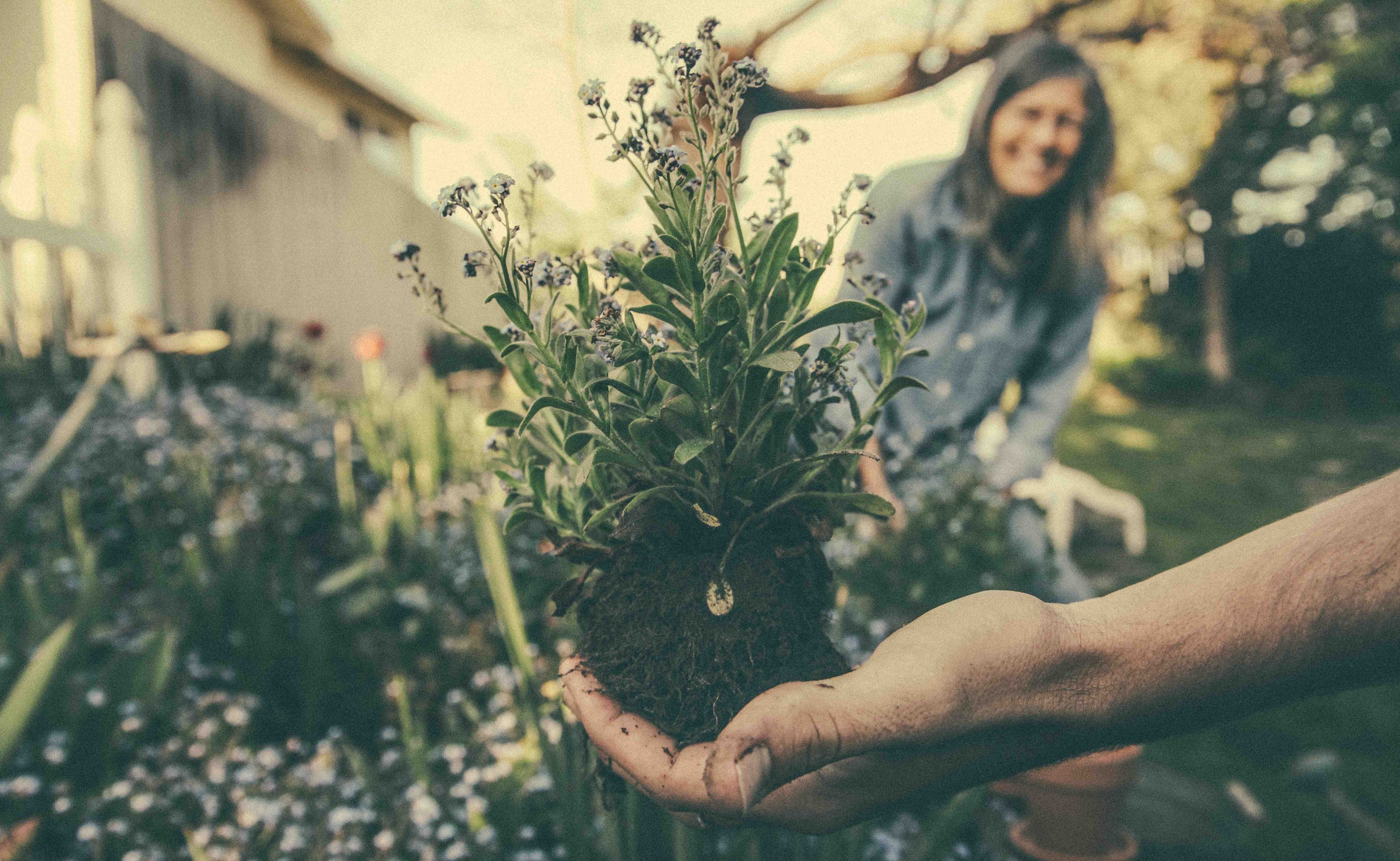 Gardening In Social Isolation