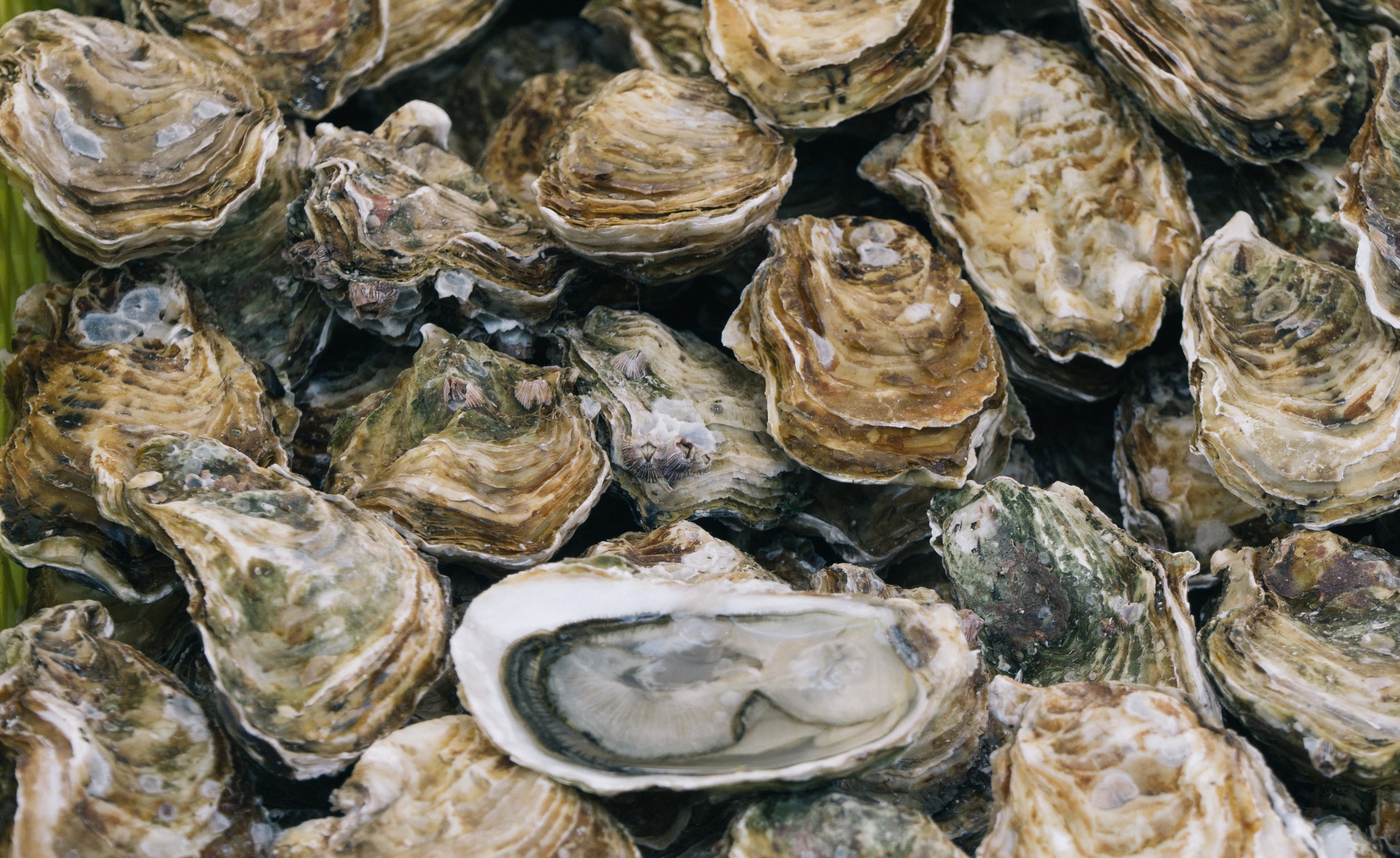 How Maui Is Using Oysters To Improve Water Quality